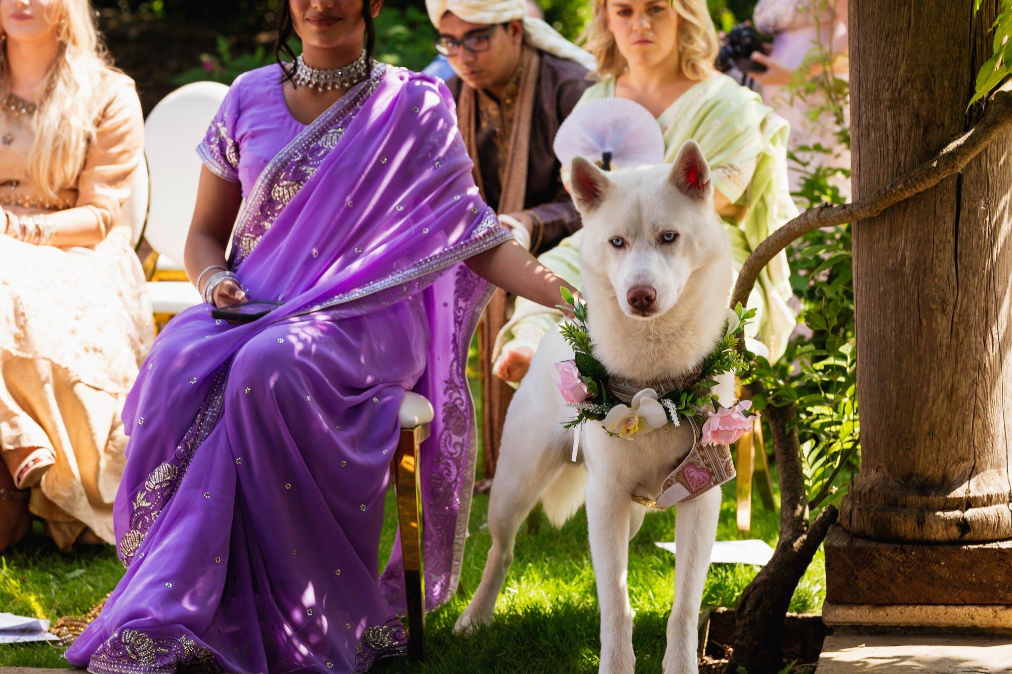 Euridge Manor, Cotswolds, Hindu wedding ceremony, white husky dog, Asian Wedding Photography